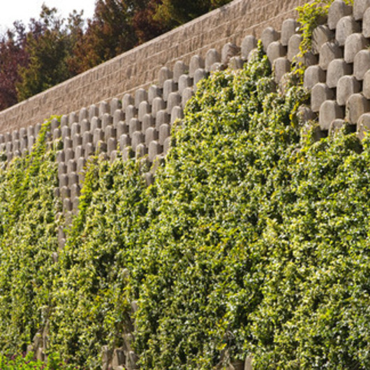 Concrete Wall Block - VERDURA / Soil Retention