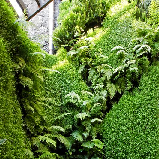 Muro Verde/Jardin Vertical