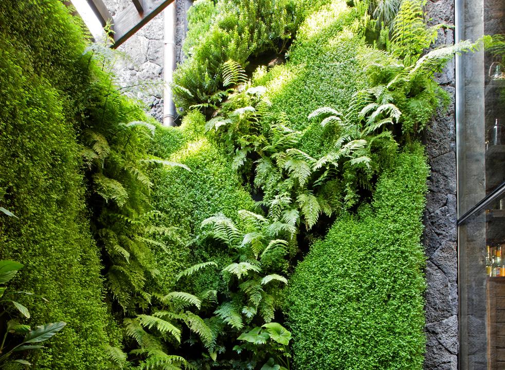 Actualidad for Jardines verticales lima