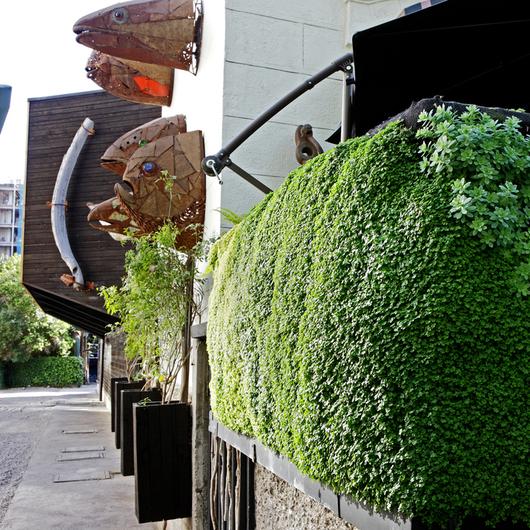 Muro Verde Hidropónico en Restaurant Aquí está Coco