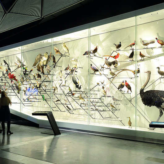 Display Case - Fuoriclasse