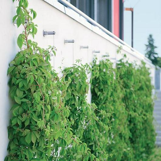 Green Wall System - FAÇADESCAPE™ / Carl Stahl DecorCable