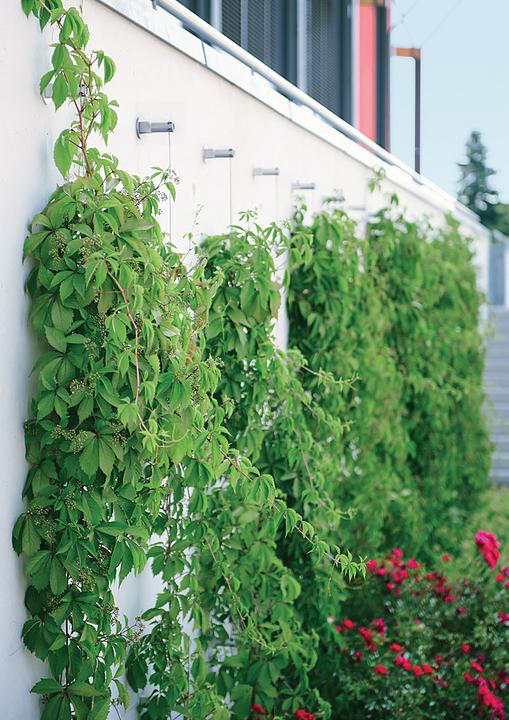 Green Wall System - FAÇADESCAPE™