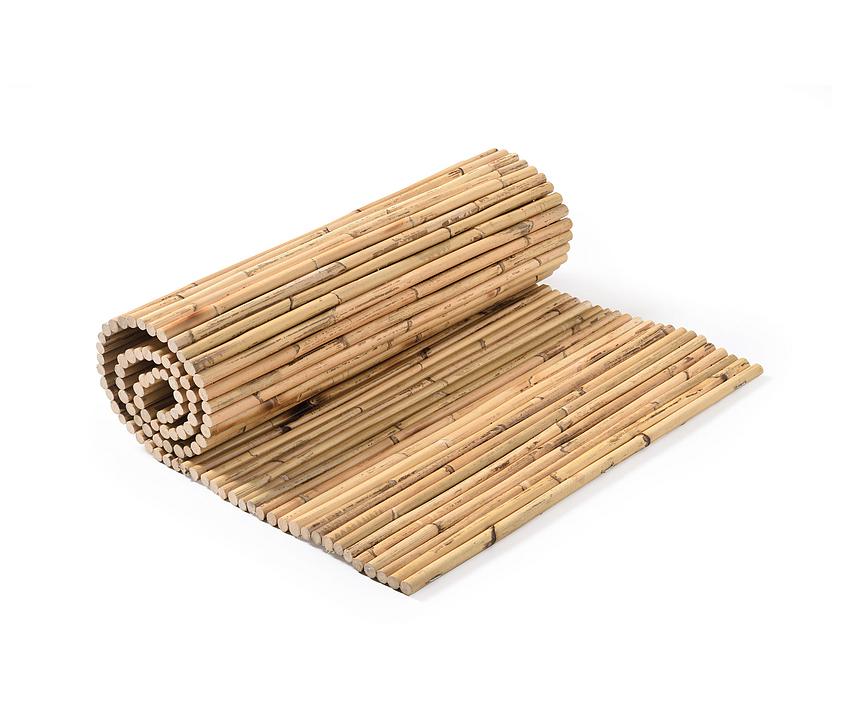Bamboos - Rattan Bamboo
