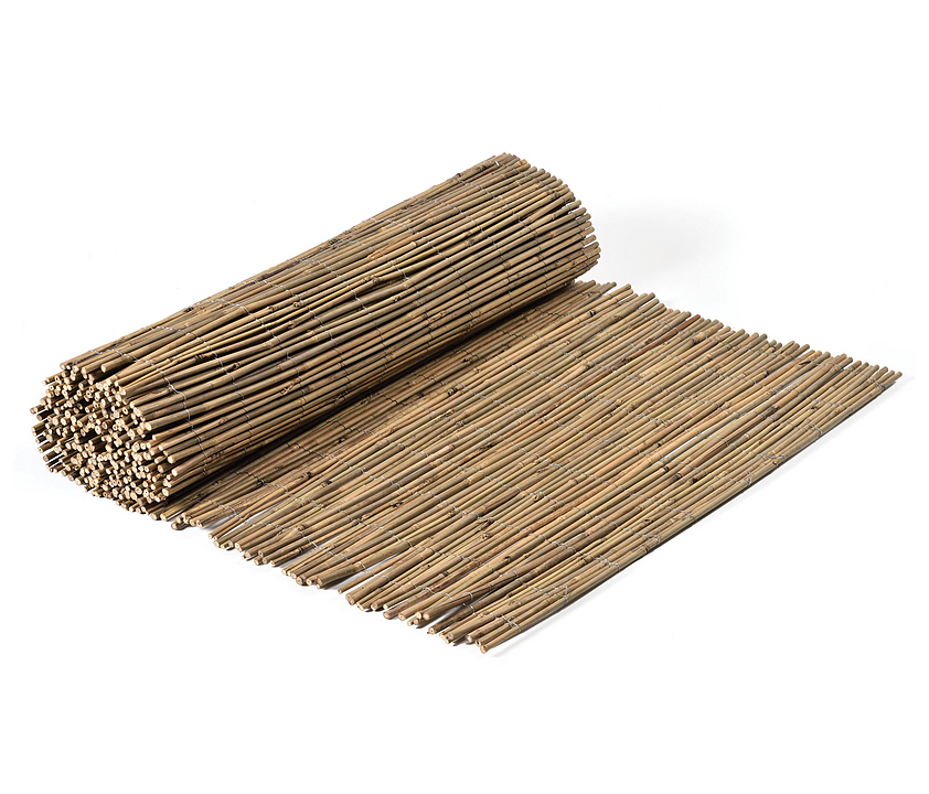 Bamboos - Tonkin Bamboo