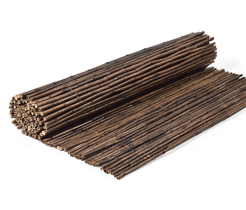 Bamboos - Nigra Bamboo
