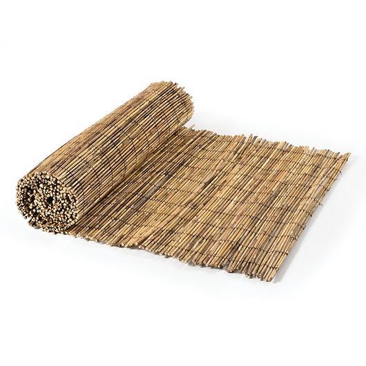 Reeds - Fern