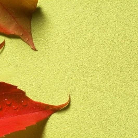 Papeles Murales Arte / Carpenter